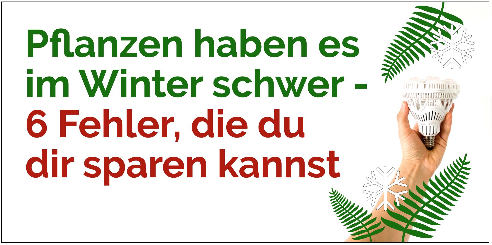Pflanzen haben es im Winter schwer